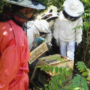Formation théorique et pratique sur l'apiculture à la Ferme du Bonheur de Nanterre